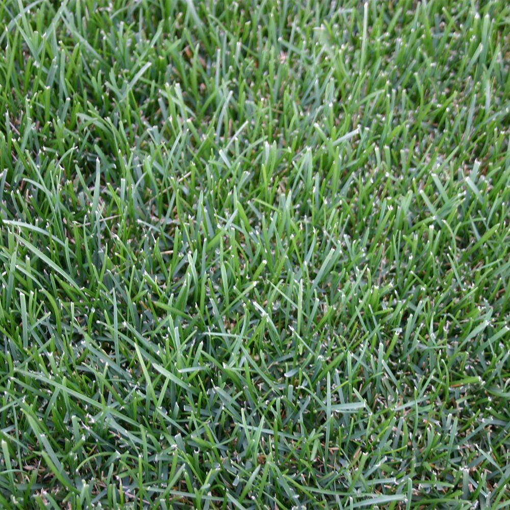 Grass Seed Germination - How Long to Grow New Grass Seed