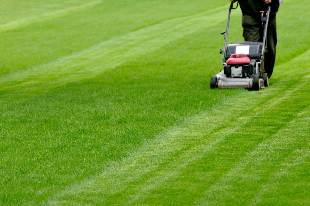knowing when to dethatch lawns is useful