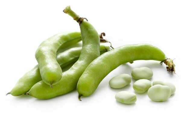 start growing fava beans like these