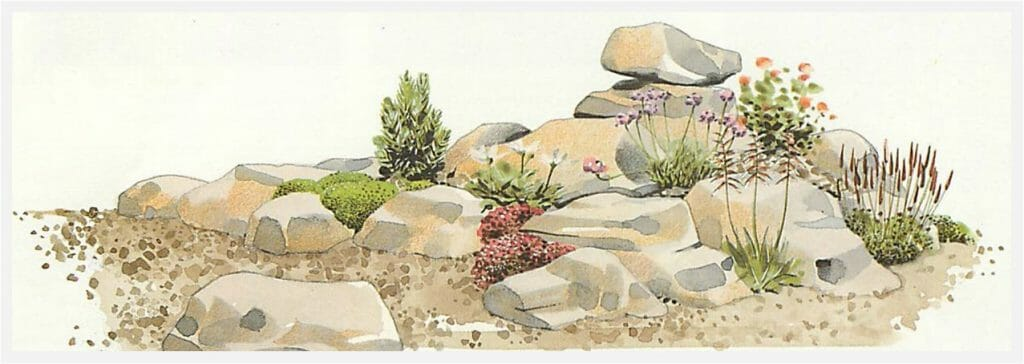 plant the rock garden with suitable plants