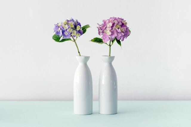 with proper cut hydrangea care your blooms will last in a vase
