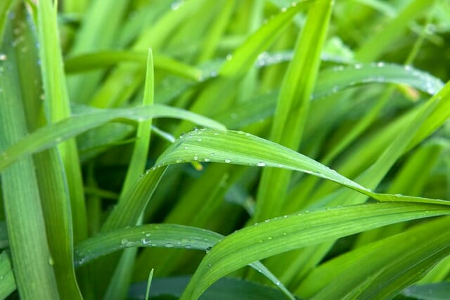 When is the best time to fertilize lawn before or after rain? We will find out here.