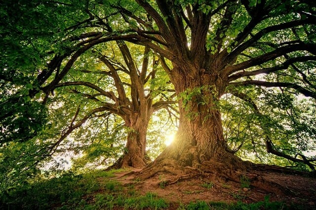 remember that invasive tree roots can affect your property value