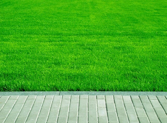 use super natural lawn fertilizer for results like this