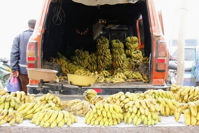 Whole bananas can also be used for composting.