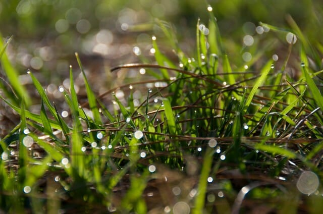 Be sure to feed lawn after rain.