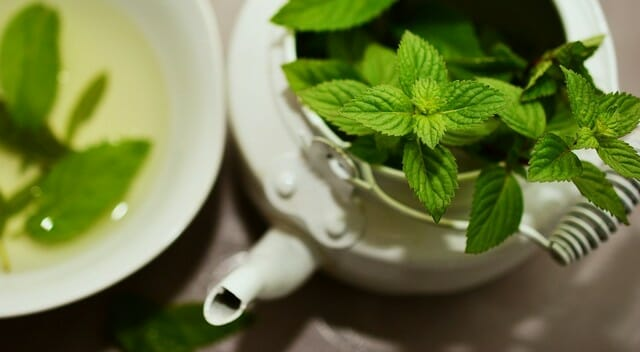 Essential oils, like cinnamon oil or peppermint oil are good for confusing their scent trails.