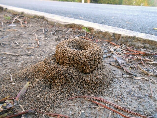 Start your pest control at the fire ant hill