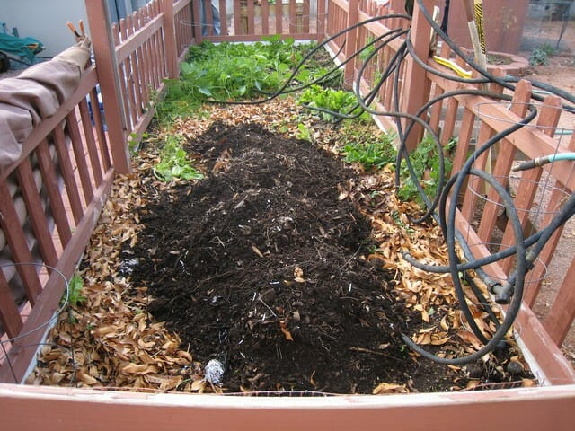 Adding kitchen scraps to your compost will help your plants to grow.