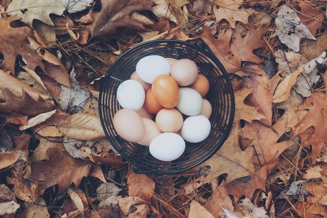 Add egg shell to your compost pile and help make your garden happy.
