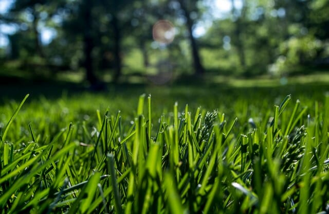 To have thick green grass, use a plant based compost to deliver nutrients your lawn.