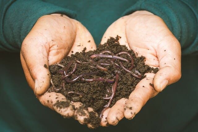 Something you may want to use through the growing season as a great resource for your plant roots is worm castings.