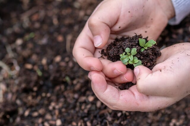 Does potting soil go bad? If it does, potting soil may be used in garden beds.