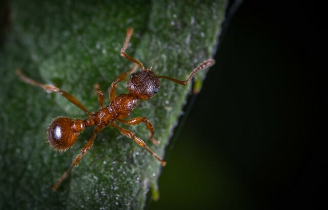 worker ants will be looking for food sources such as crumbs