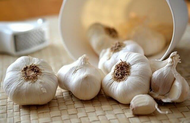 getting rid of sugar ants can be done with garlic