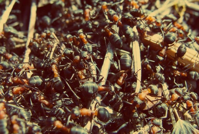 close up entry points to avoid an ant infestation