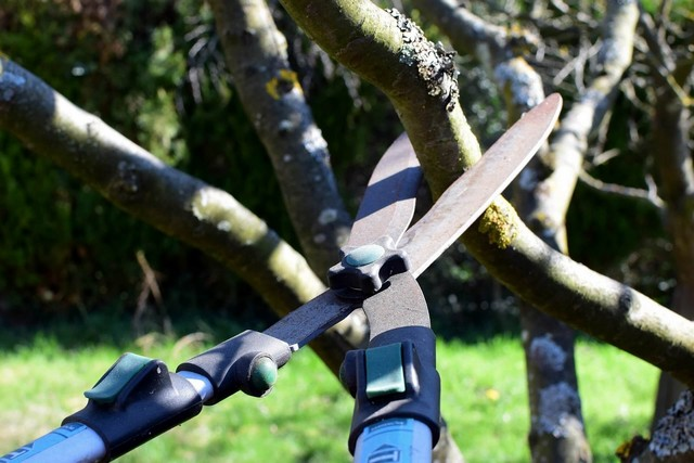 Fruit trees do not need treatment after pruning