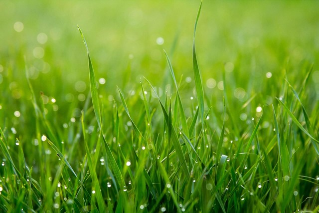 yellow grass can indicate that your grass may need nutrients